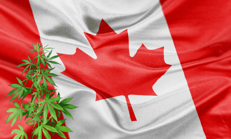 Cannabis Black Marketing Exists Even After Legalization of Weed In The Canadian Market